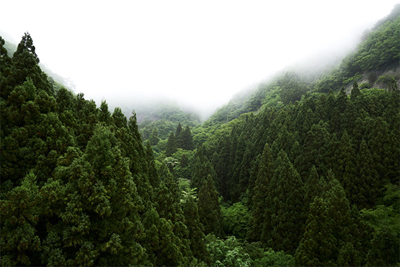 Forest near Fukushima, Japan